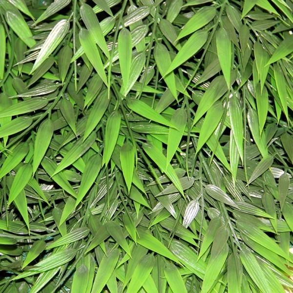 Terra Exotica Terrarium Plants - Big Bamboo Rattan